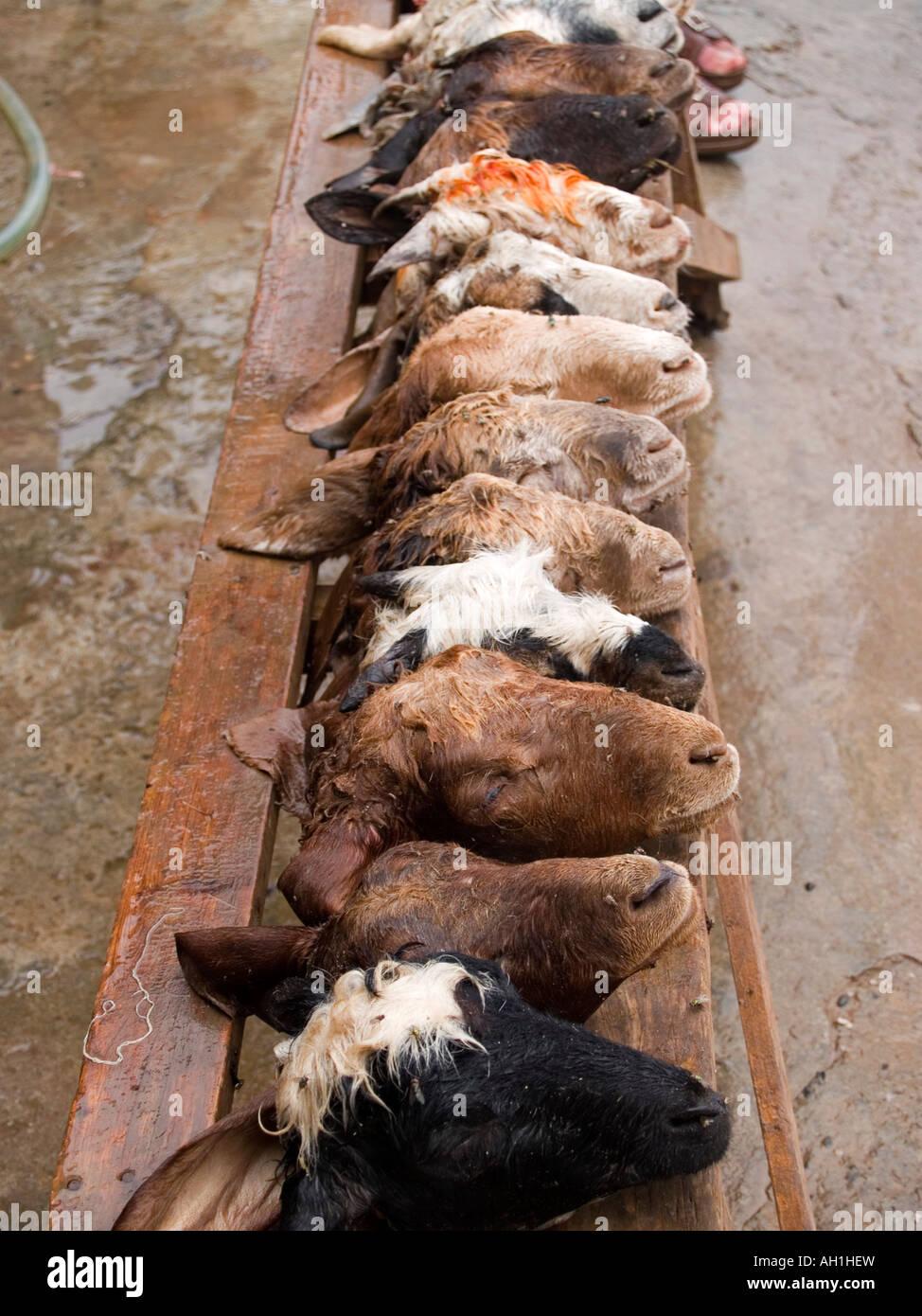 goat heads in the market in Afghan Bazaar Peshwar Pakistan Stock