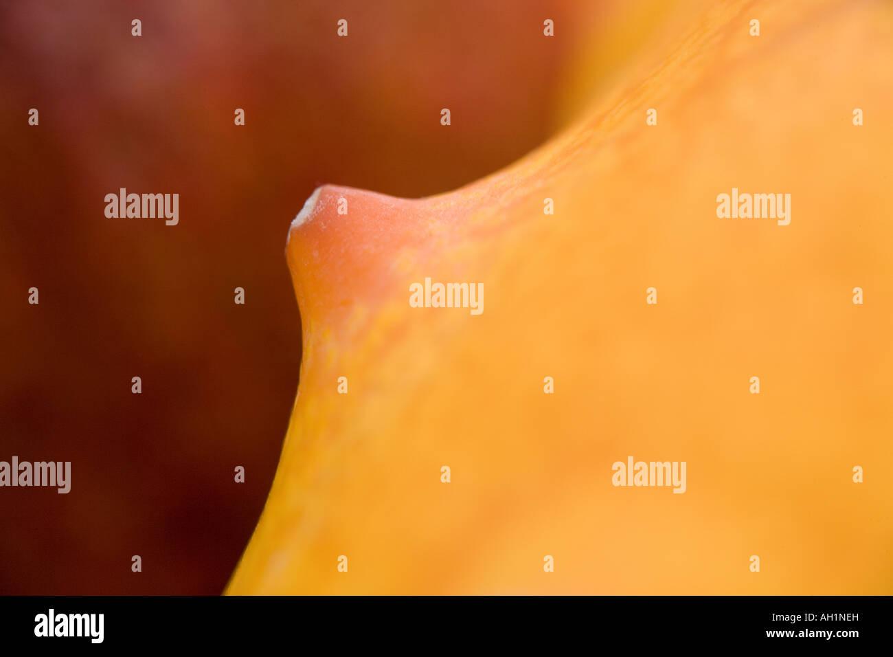 Abstract, horned melon shot at extreme macro - Stock Image