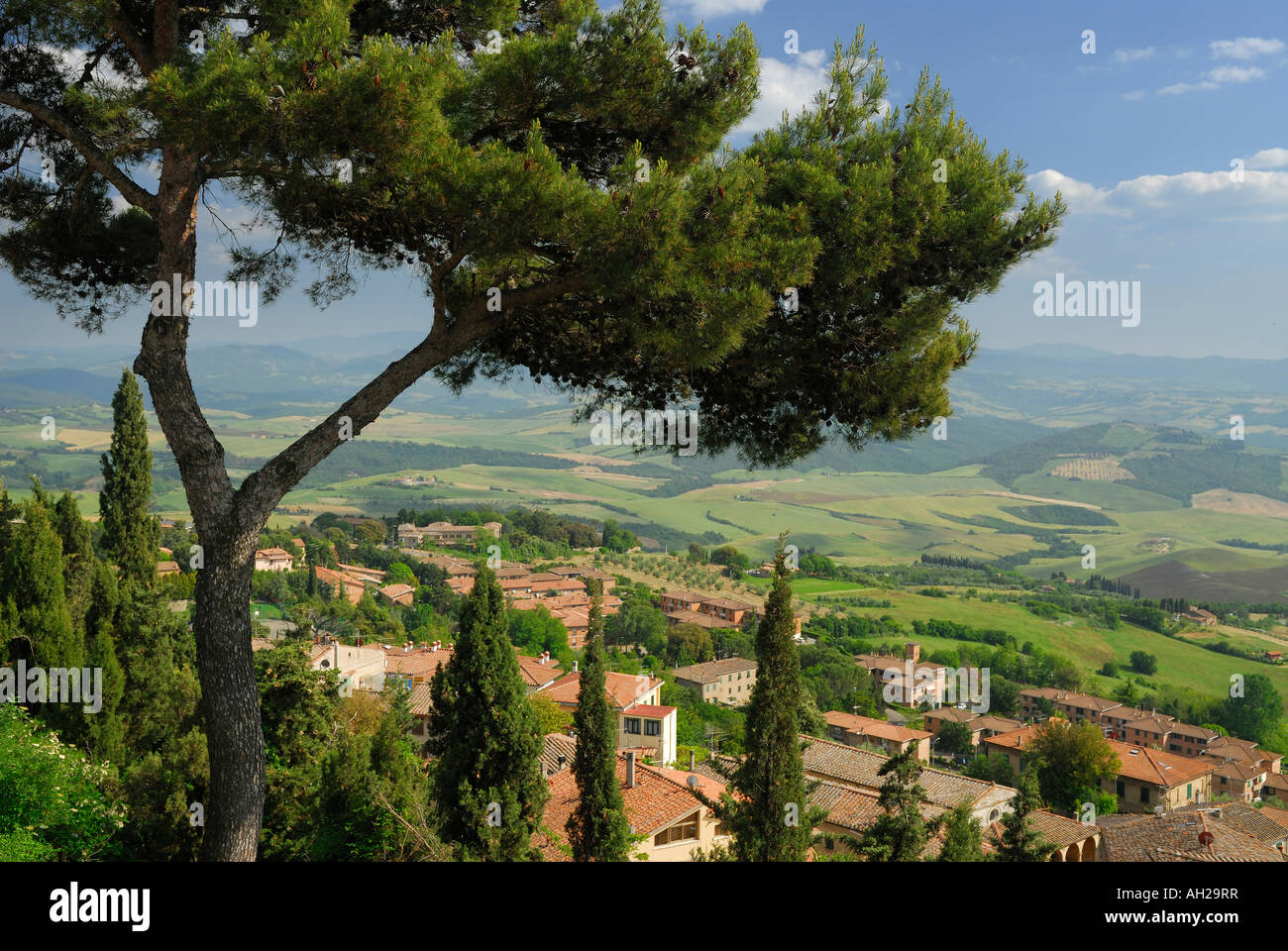 Pine tree overlooking Volterra and the Cecina Valley from hilltop in Tuscany Italy - Stock Image