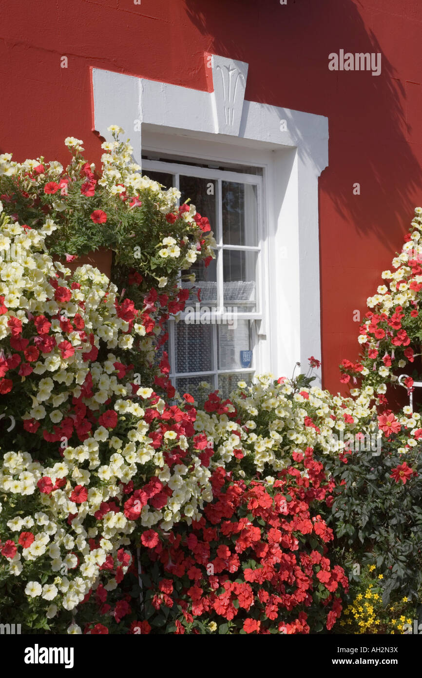 Colourful flower plant display by red painted building exterior with white framed window. Aberaeron Ceredigion Mid - Stock Image
