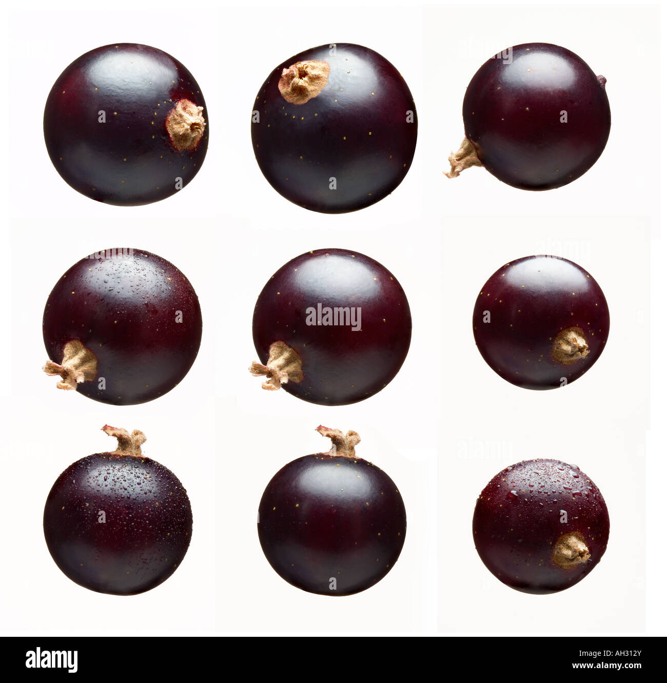 blackcurrants - Stock Image