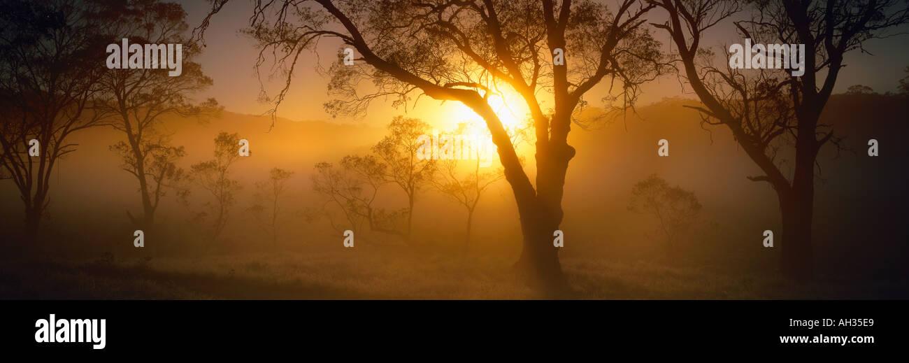 Dawn at Polblue Marsh Barrington Tops New South Wales Australia - Stock Image
