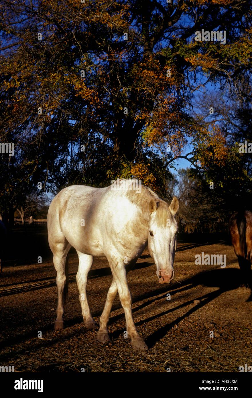 Bandera Texas Ranch Stock Photos & Bandera Texas Ranch
