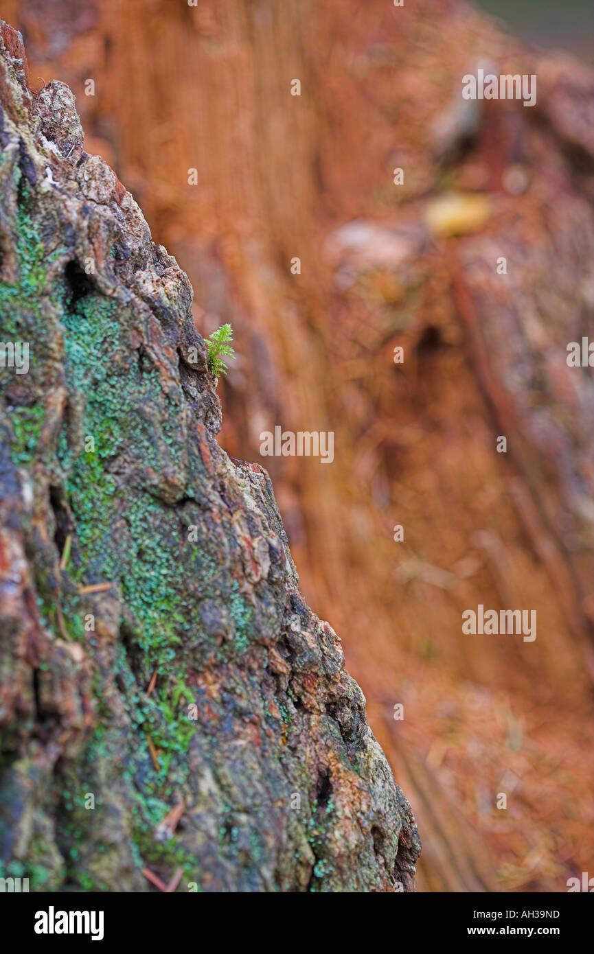 dramatic canyon or rotting treetrunk - Stock Image