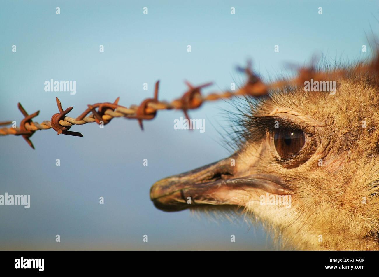 Close up of bird's face - Stock Image
