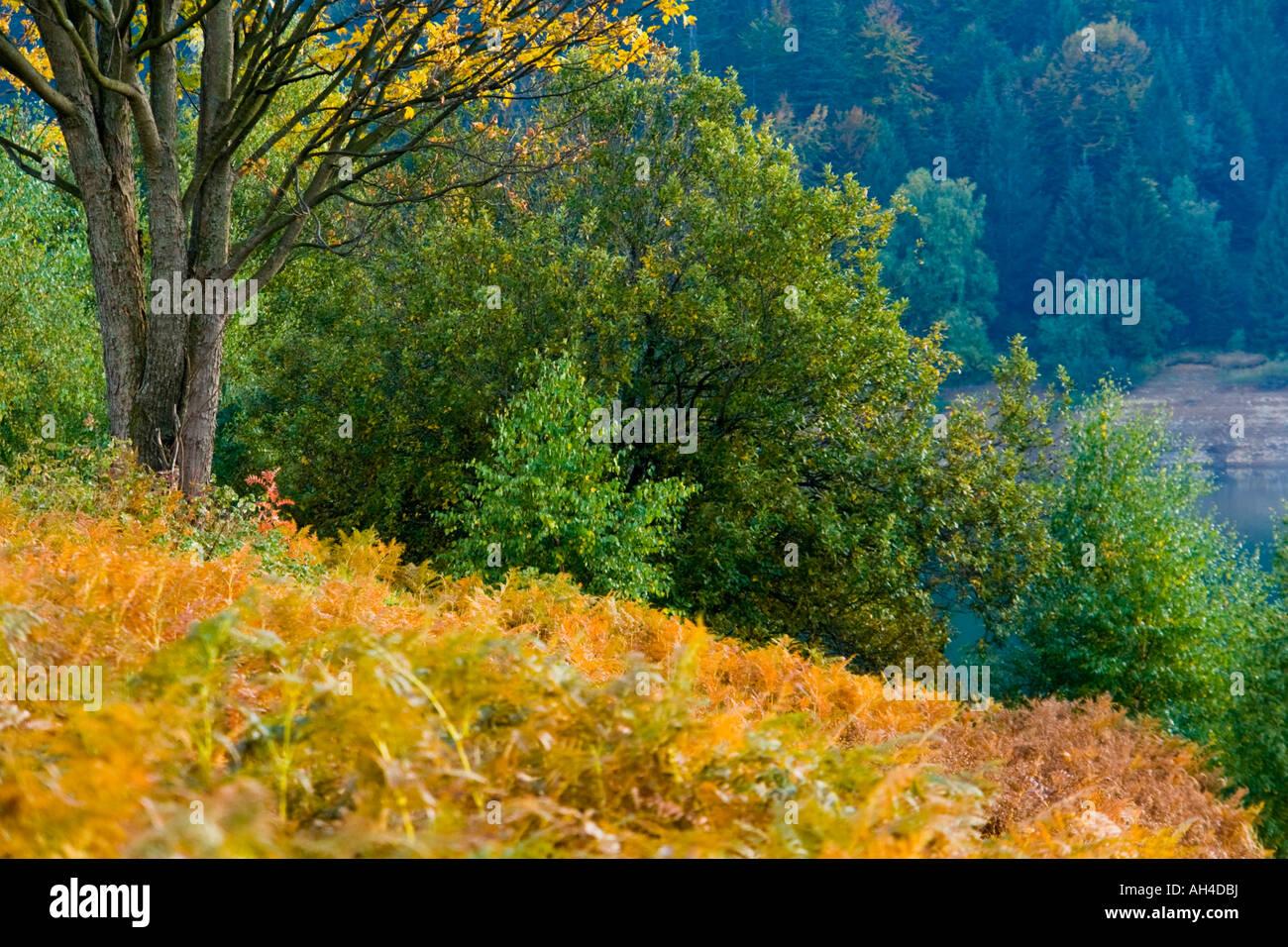 Autumn foliage vivid colors Stock Photo