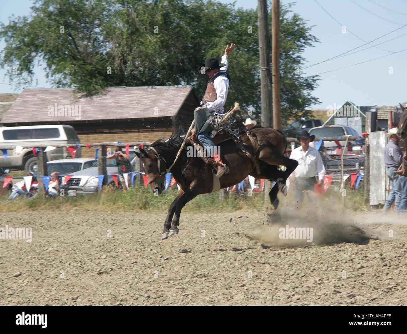 Bucking Bronco - Stock Image