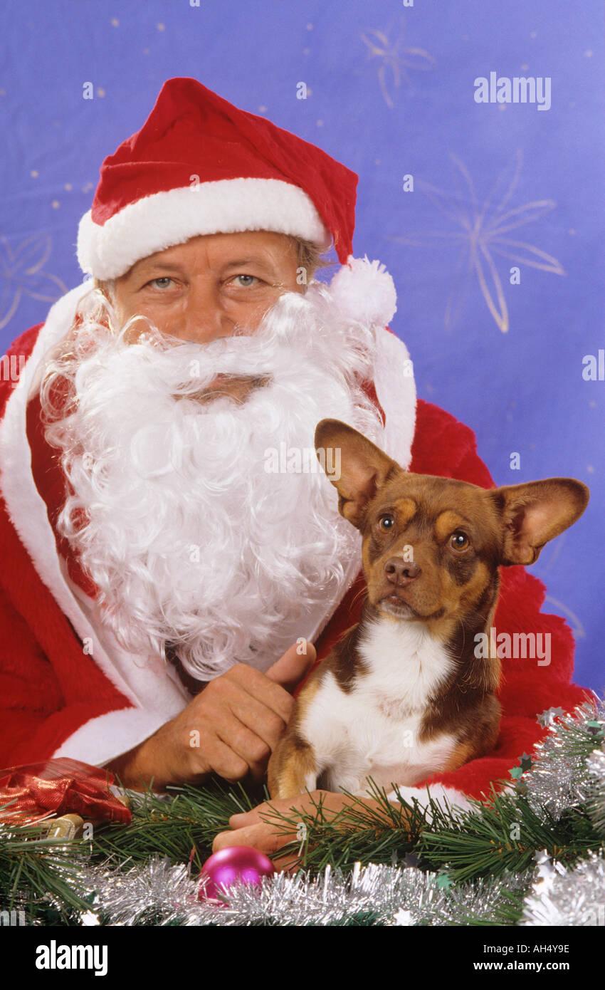 christmas : dog and Santa Claus - Stock Image