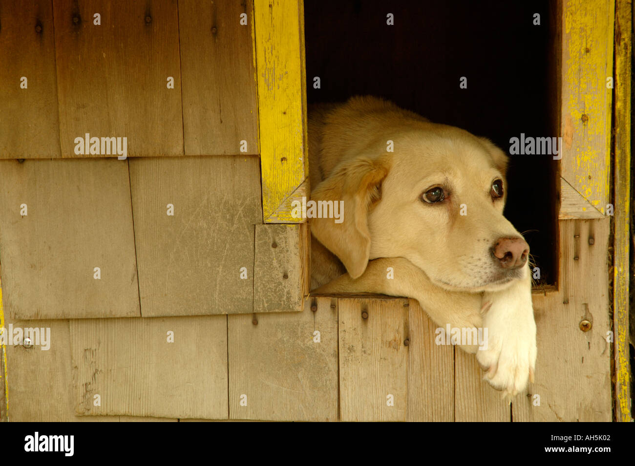 In the doghouse stock photos in the doghouse stock for Dog house for labrador retriever