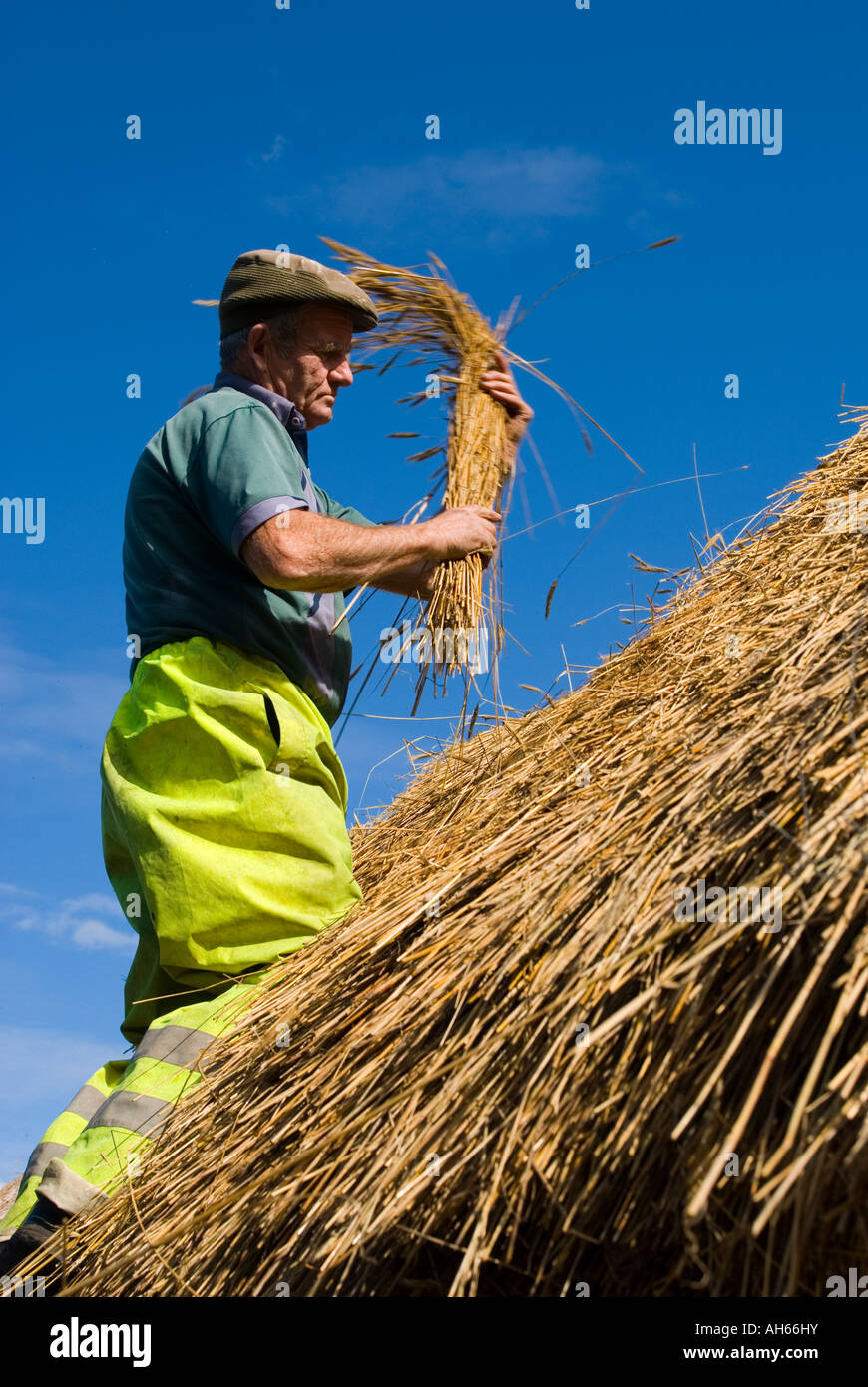 September 2007 Ardara County Donegal Ireland Peter McGuire at work thatching a cottage Photo by Richard Wayman - Stock Image
