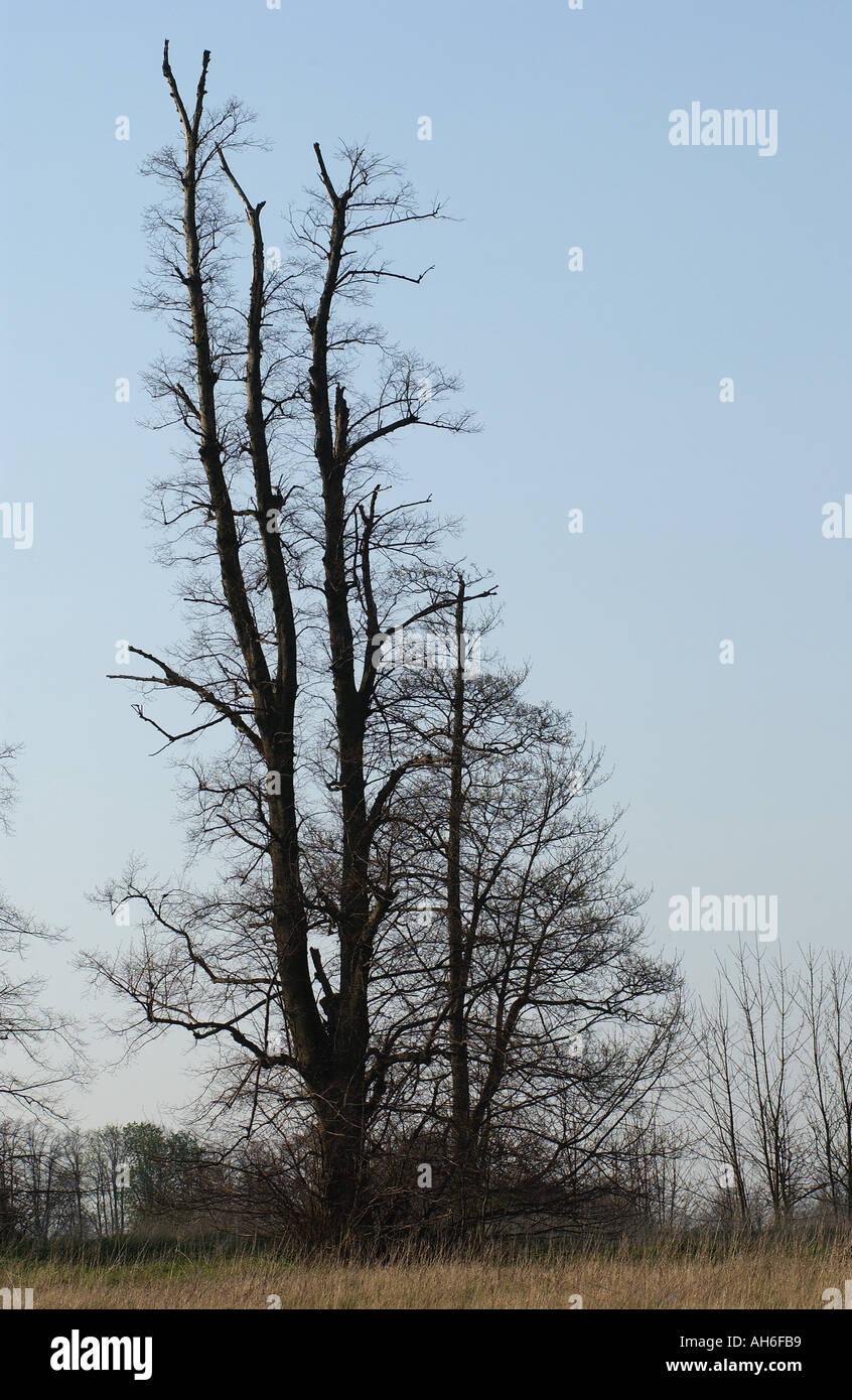 Trees in winter season - Stock Image