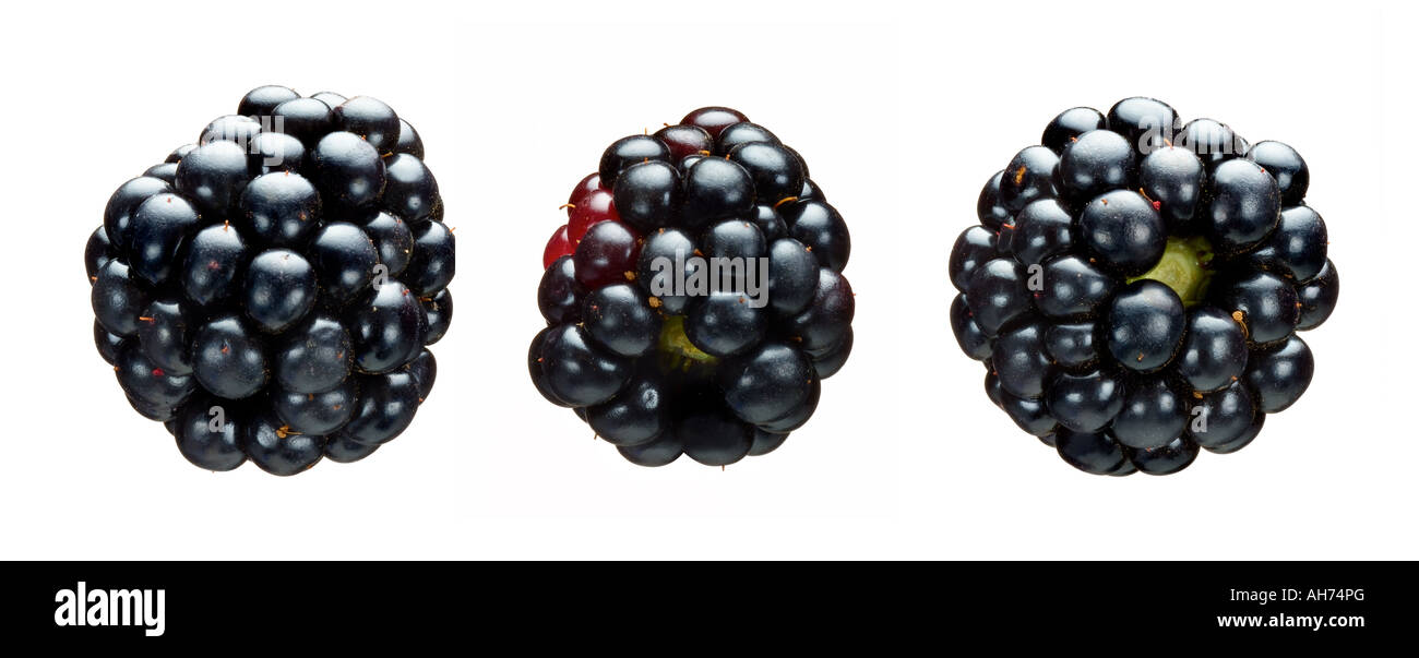 blackberries - Stock Image
