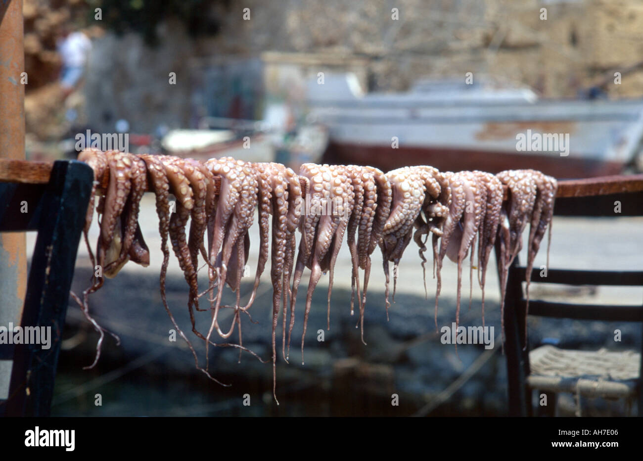 Octopus Octopi Drying in the Sun Prior to Cooking - Stock Image