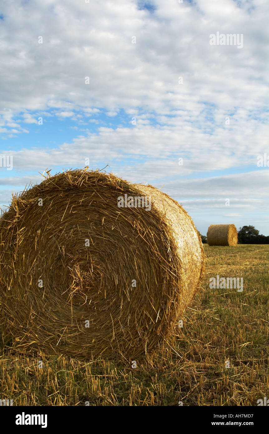 haybale bail bale hay harvest blue sky summer straw bedding scenic countryside farm farming agriculture agricultural farmer - Stock Image
