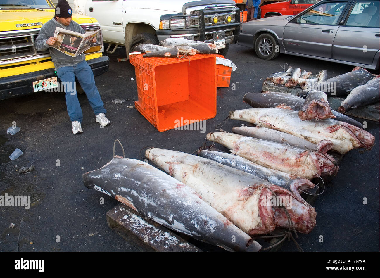 La Viga Mexico City s wholesale fish market Stock Photo: 8220505 - Alamy