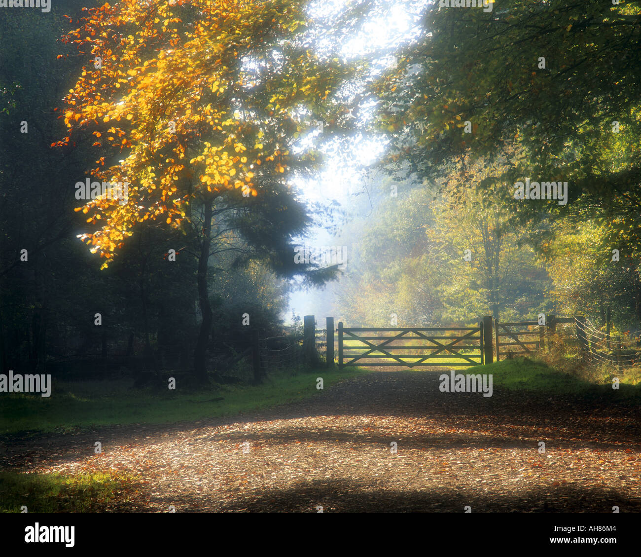 GB - GLOUCESTERSHIRE:  Autumn in the Forest of Dean Stock Photo