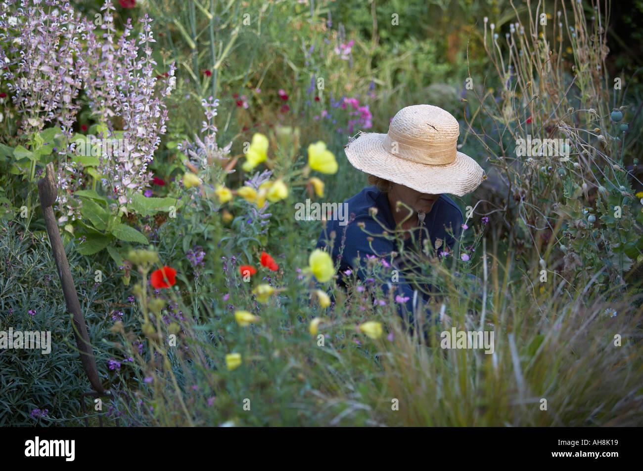 Woman gardening model released Dorset England UK - Stock Image