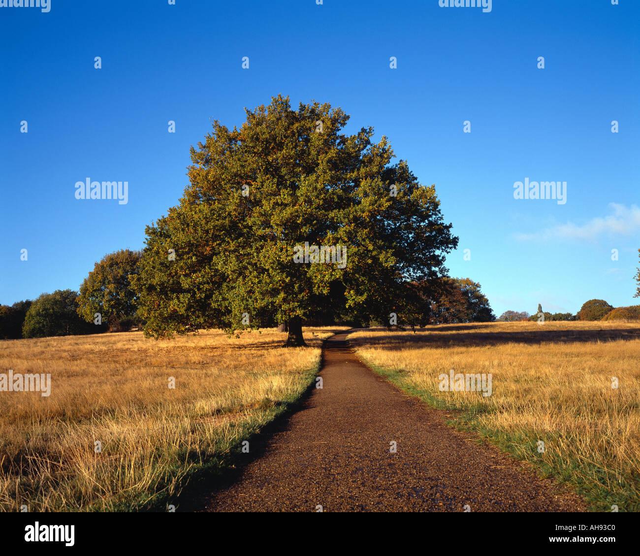 Path, Hampstead Heath, London, England - Stock Image