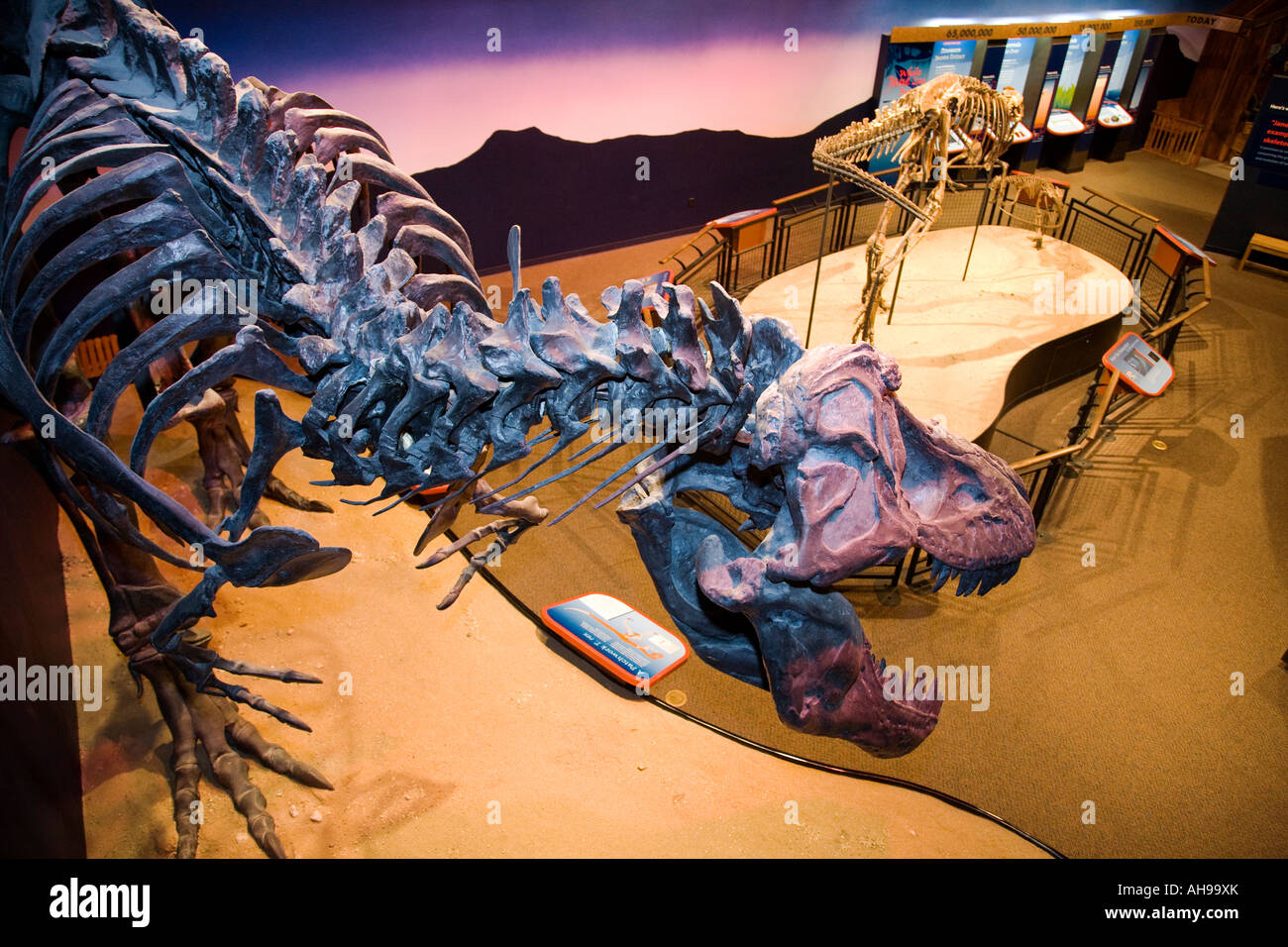 ILLINOIS Rockford Dinosaur skeletons on display Jane young Tyrannosaurus rex Burpee Museum interior - Stock Image
