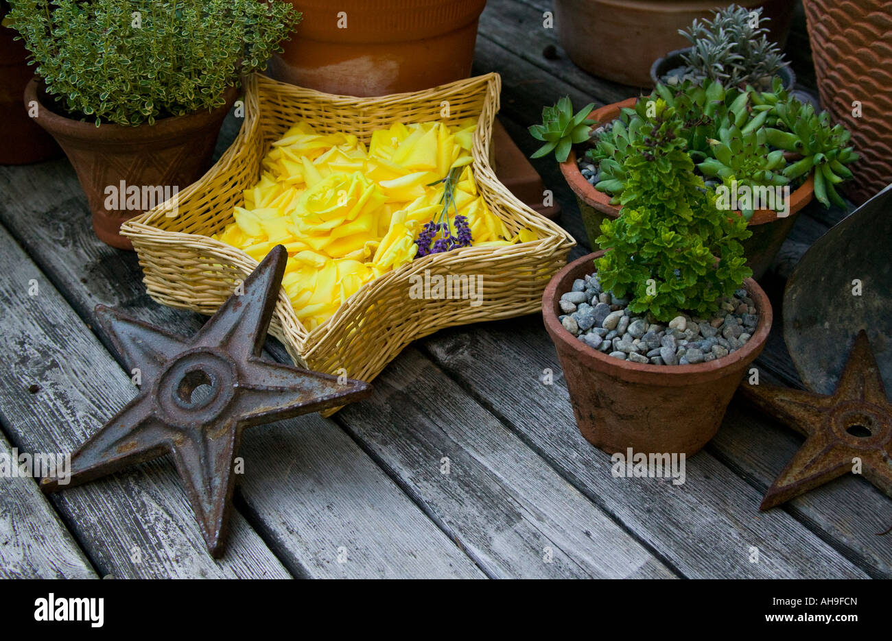 A Garden Arrangement Of Stars And Potted Plants.