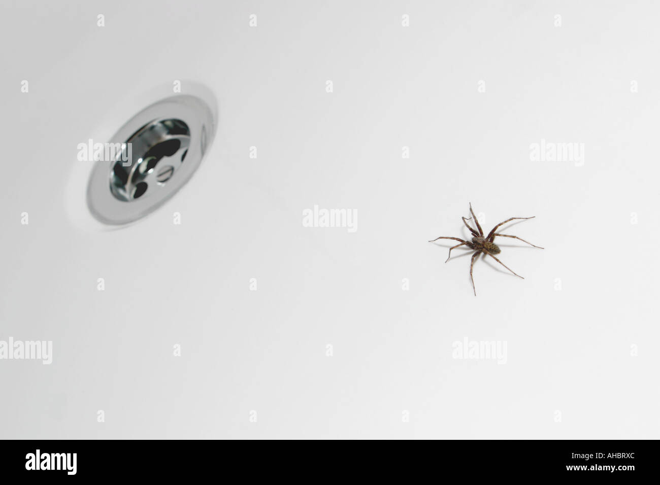 Spider trapped in the bath - Stock Image