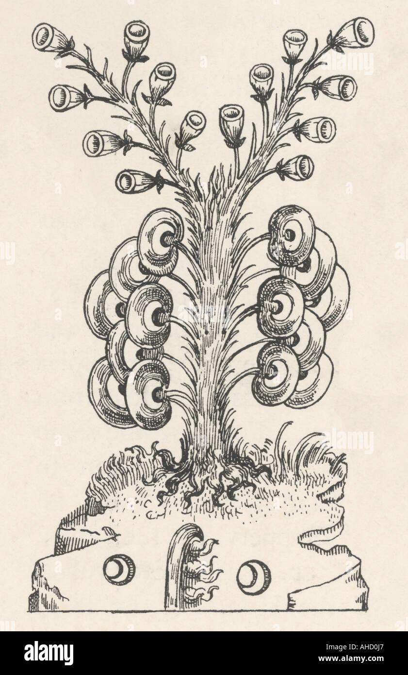 Alchemy Lunary - Stock Image