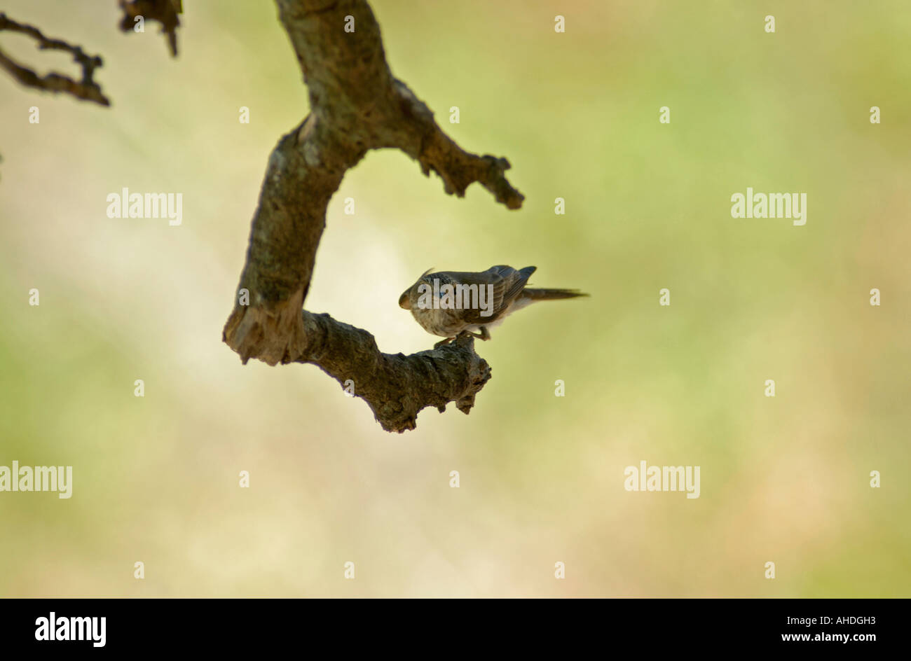 Passerine resting on branch in shade - Stock Image
