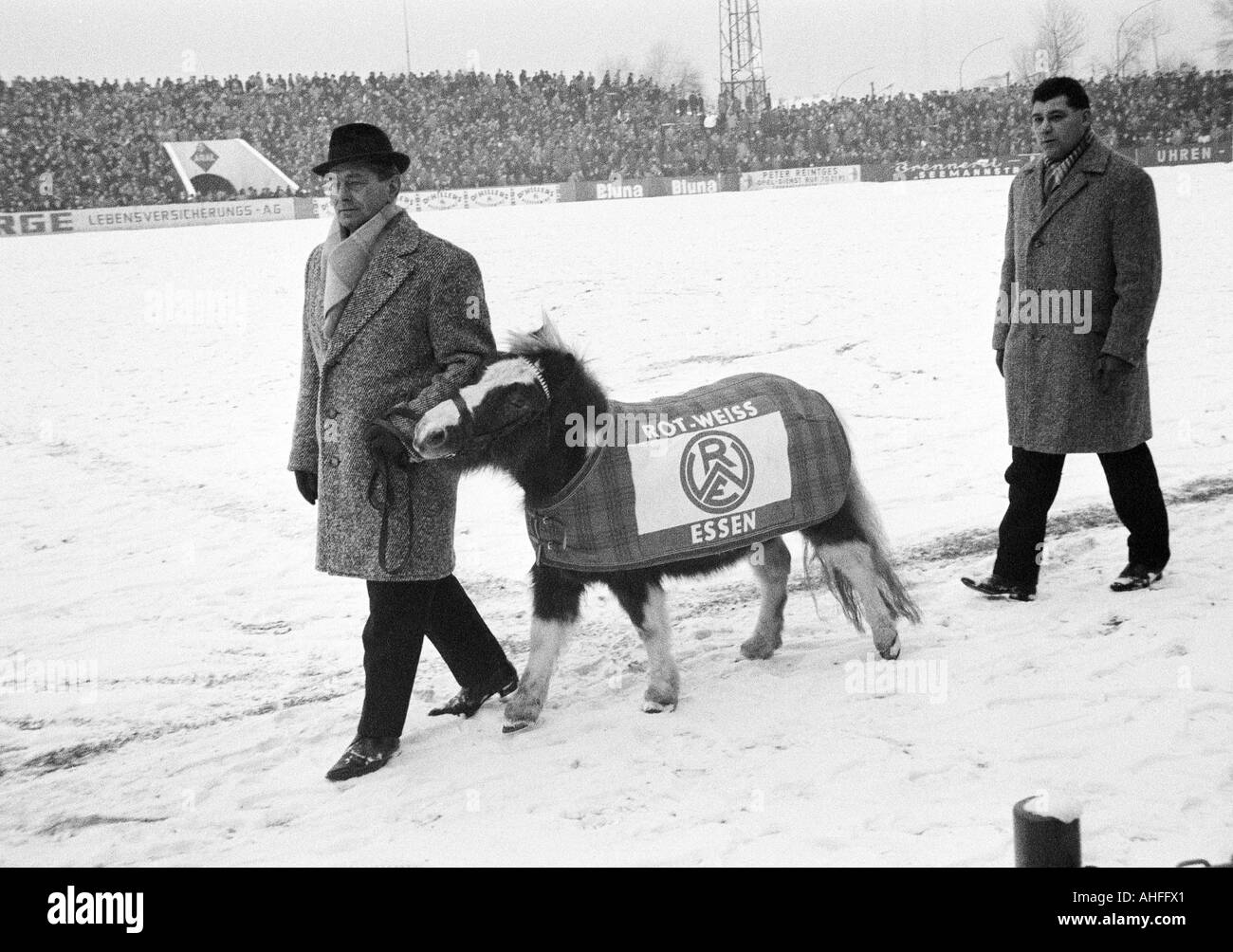 football, Regionalliga West, 1965/1966, Rot-Weiss Essen versus Eintracht Duisburg 2:0, Stadium an der Hafenstrasse in Essen, wintry, the field is snow covered, crowd of spectators, two stewards leading a pony with an emblem of Rot-Weiss Essen as a mascot - Stock Image