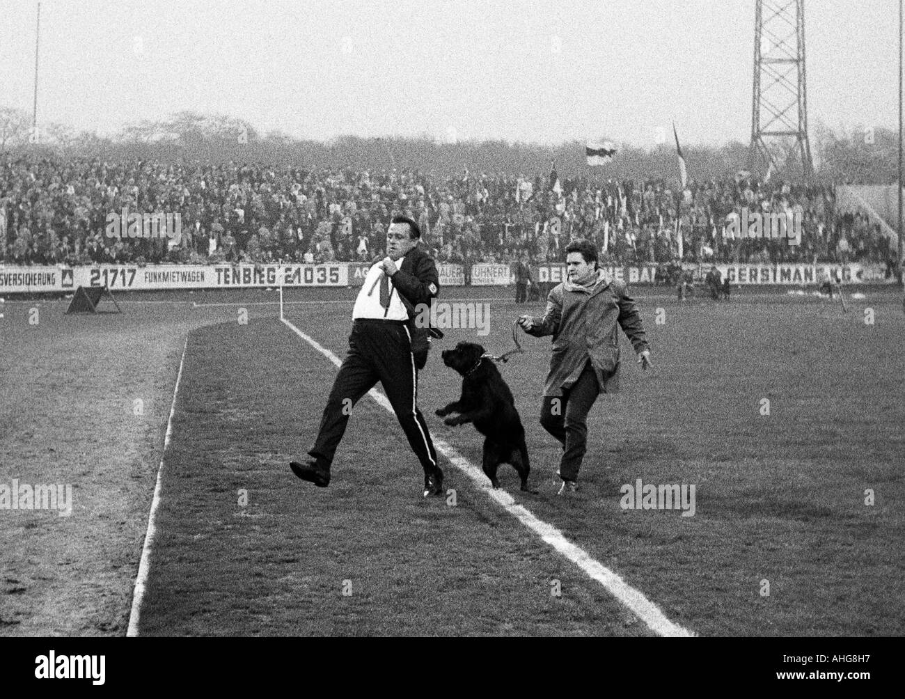 football, Bundesliga, 1969/1970, Rot-Weiss Oberhausen versus Borussia Moenchengladbach 3:4, Niederrhein Stadium, a steward with a dog chases a football fan away from the field - Stock Image
