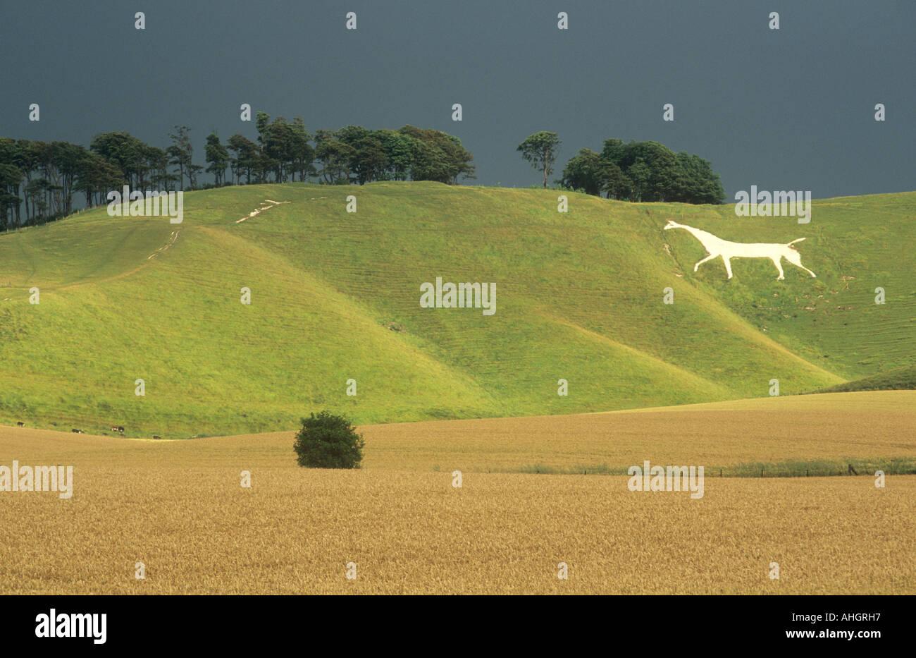 [white Horse] [ chalk figure] Stock Photo