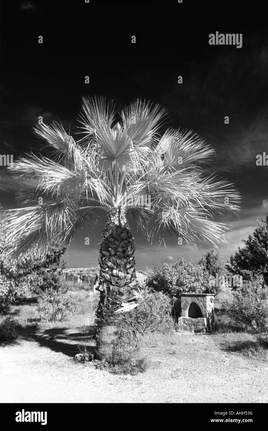 Palm Tree in near well in Cyprus - Stock Image