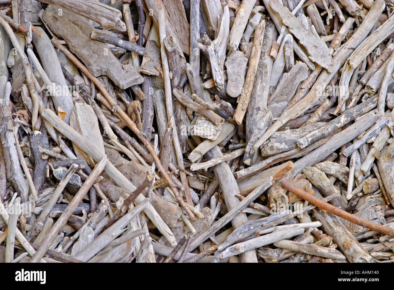 Withered wood sticks texture Valtrebbia Italy Stock Photo