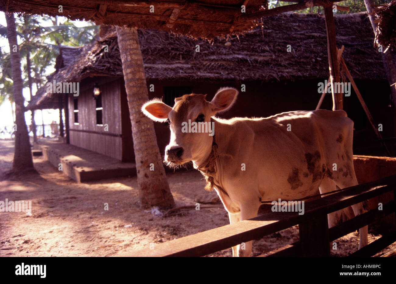 Cattle Shed Of A Traditional Home In Kerala Stock Photo 8288427 Alamy