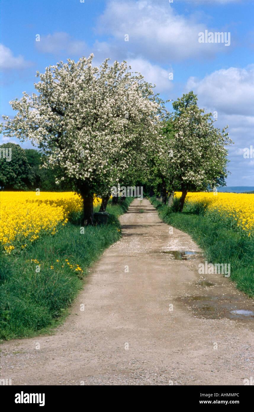 Sweden sk ne spring avenue - Stock Image