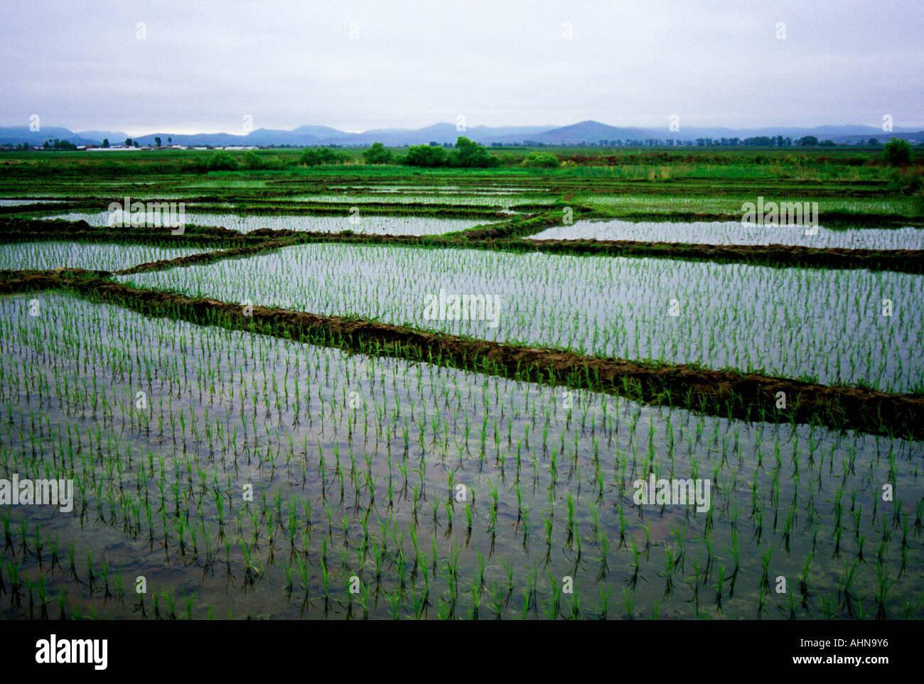 Rice paddies in Yanbian Chaoxian Autonomous Prefecture the Third Korea in Northeast Jilin province China - Stock Image