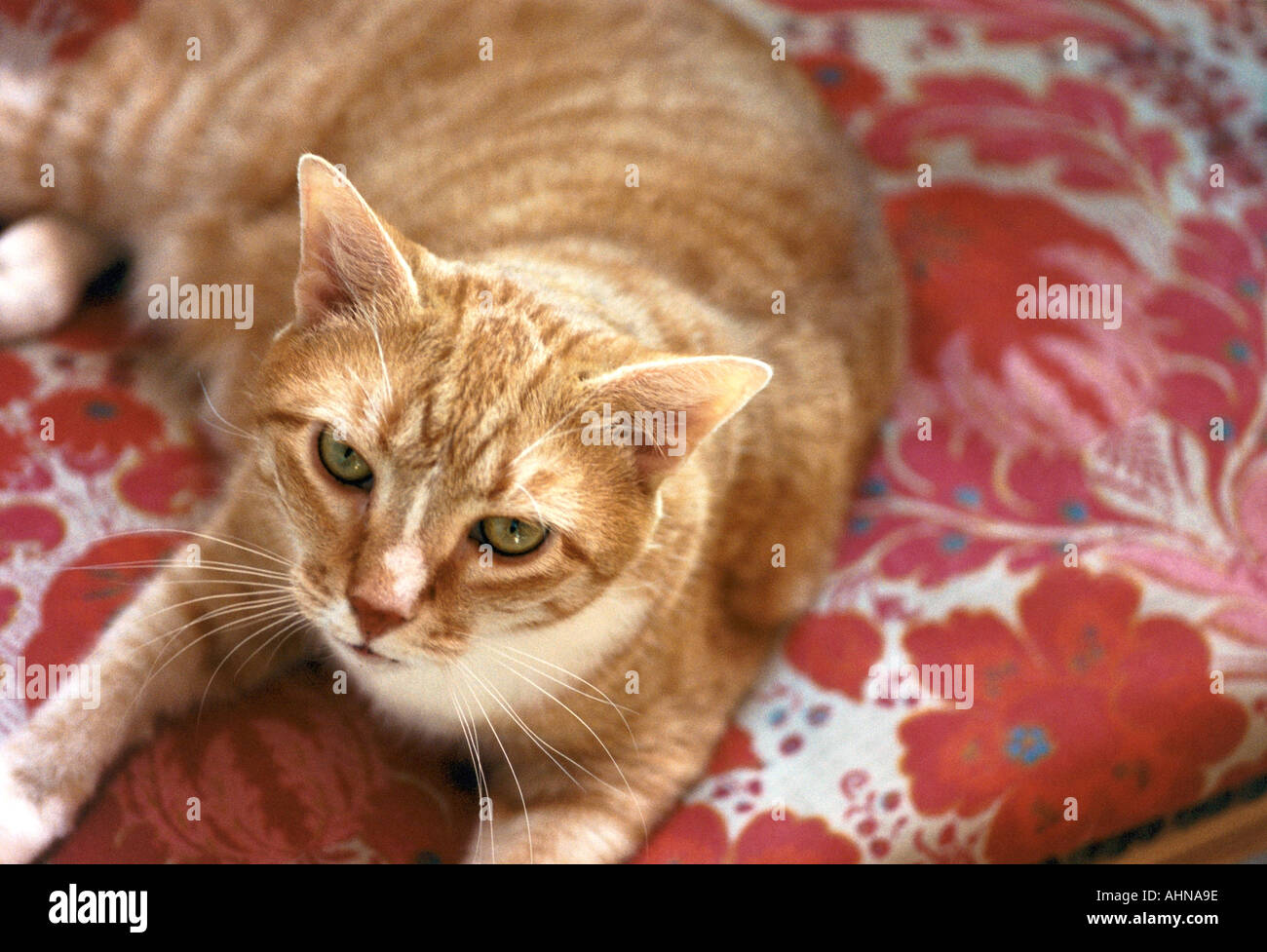 CAT ON A CHAIR - Stock Image
