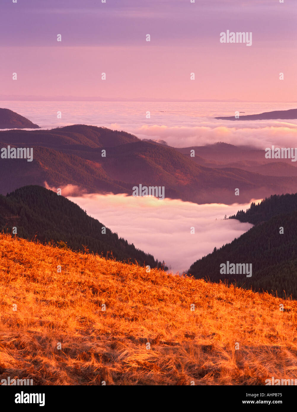 Sunset view with fog in valleys of Siuslaw National Forest As seen from Mary s Peak Oregon - Stock Image