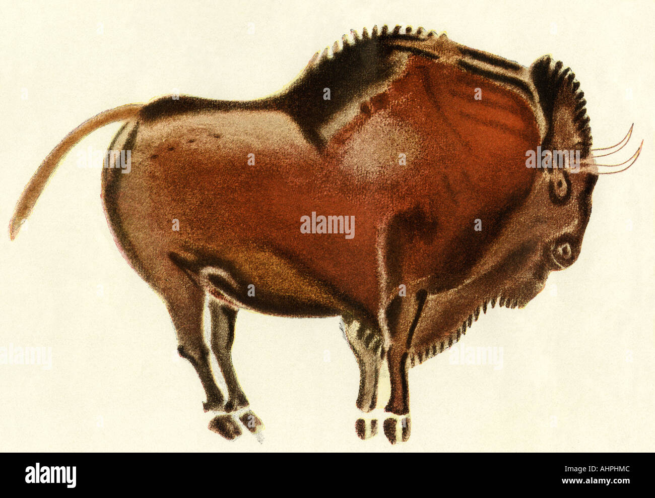 Prehistoric cave painting of a bison Altamira Spain. Color lithograph - Stock Image