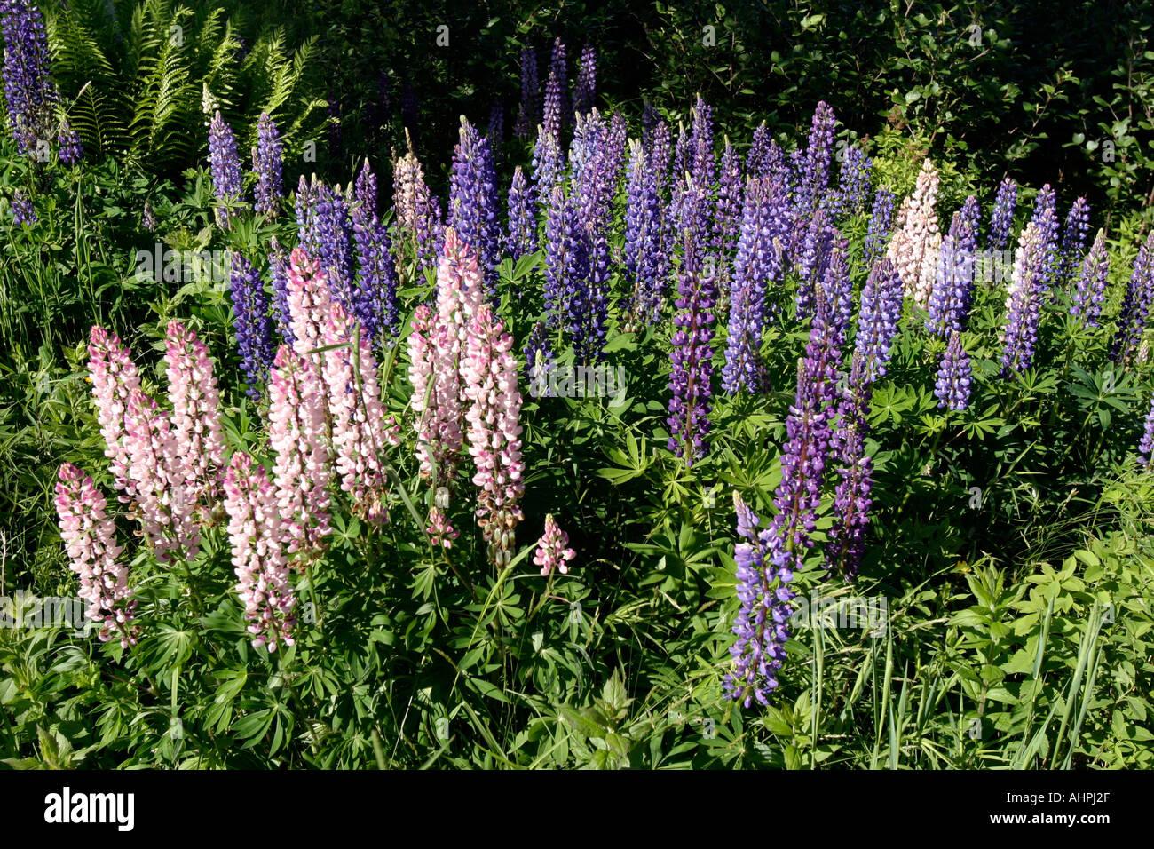 Wild Flowers blooming Stock Photo