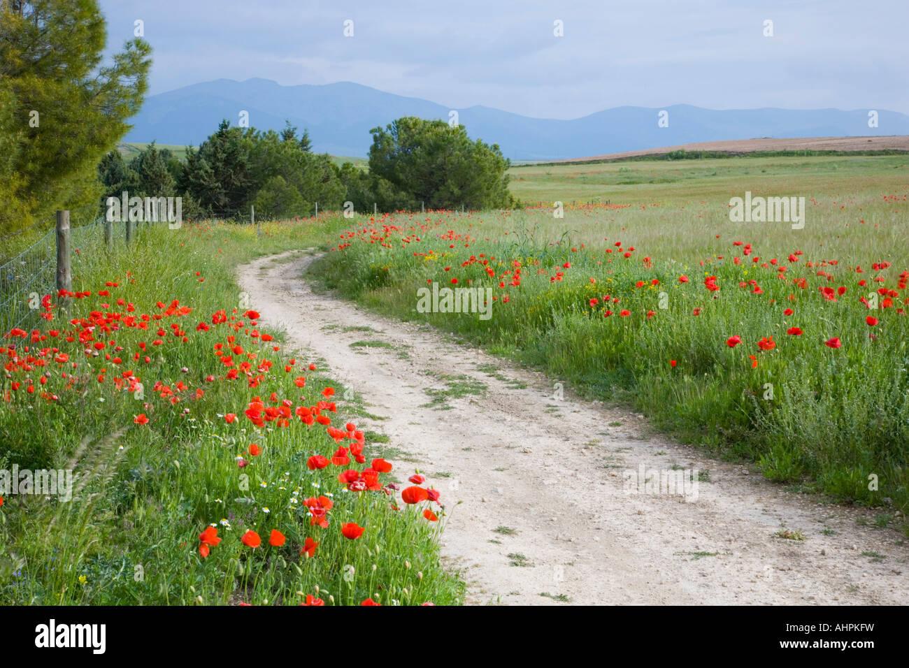 Segovia, Castile and León, Spain. Winding path through poppy field, Sierra de Guadarrama beyond. Stock Photo