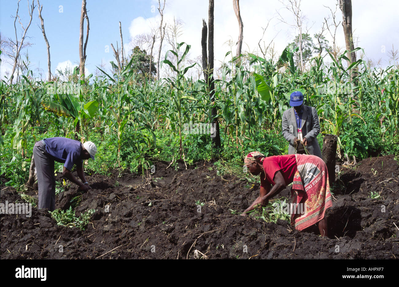 Villagers preparing land for maize growing, Mozambique - Stock Image