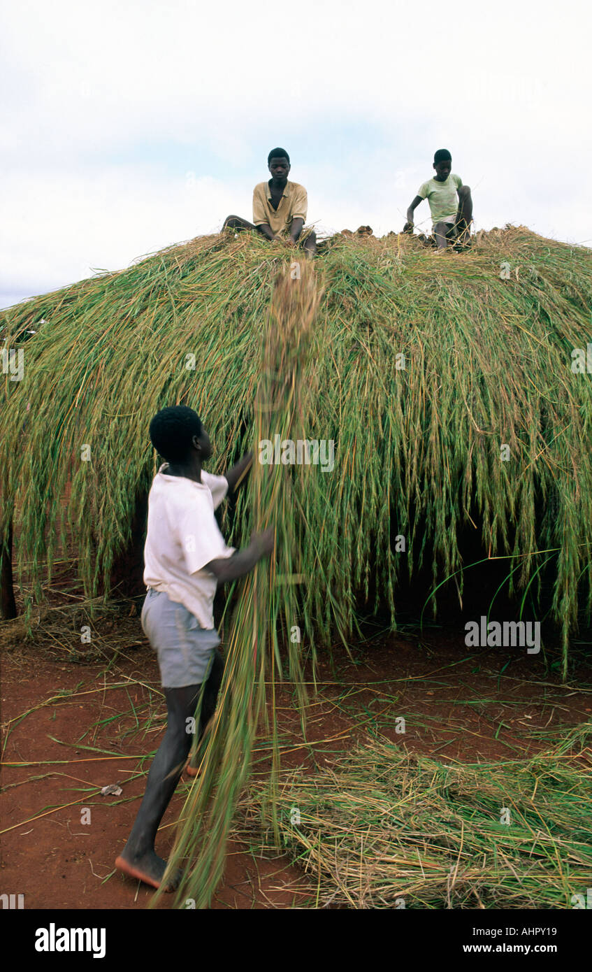 Boys thatching a traditional house. Mozambique - Stock Image