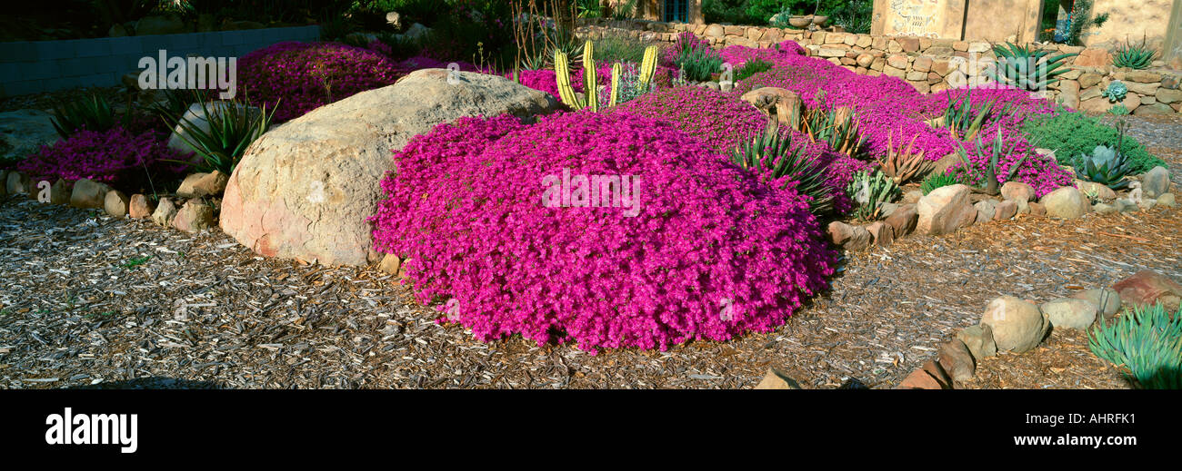 Pink Flowers Center for Earth Concerns Ojai California - Stock Image