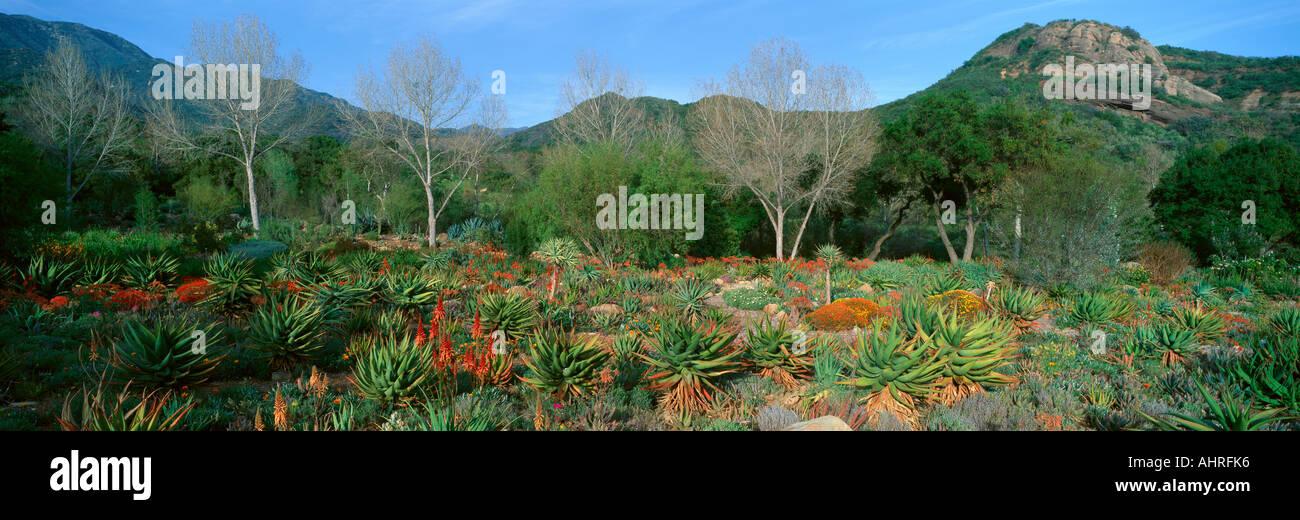 Garden At Center for Earth Concerns Ojai California - Stock Image