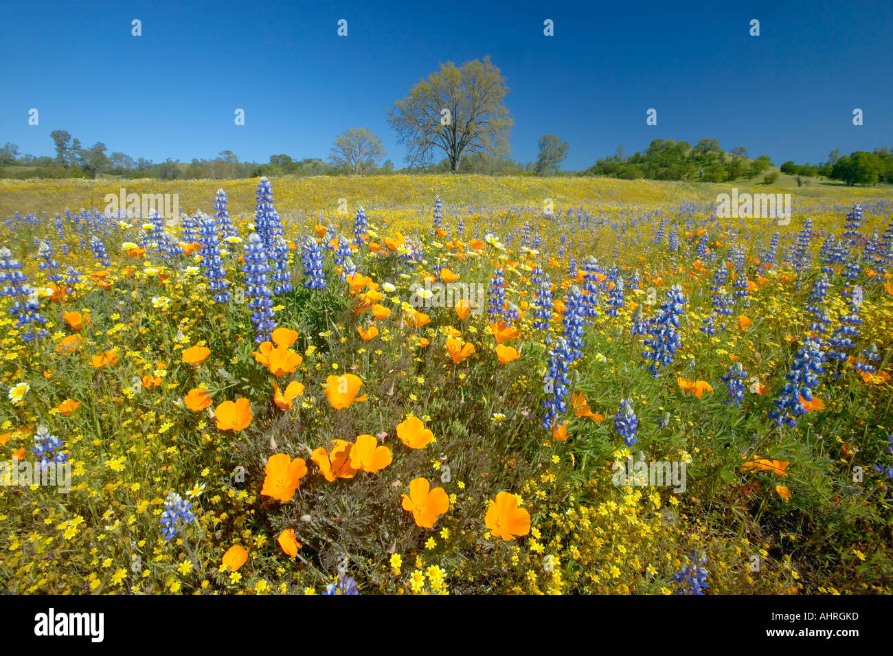 A colorful bouquet of spring flowers and california poppies near a colorful bouquet of spring flowers and california poppies near lake hughes ca mightylinksfo
