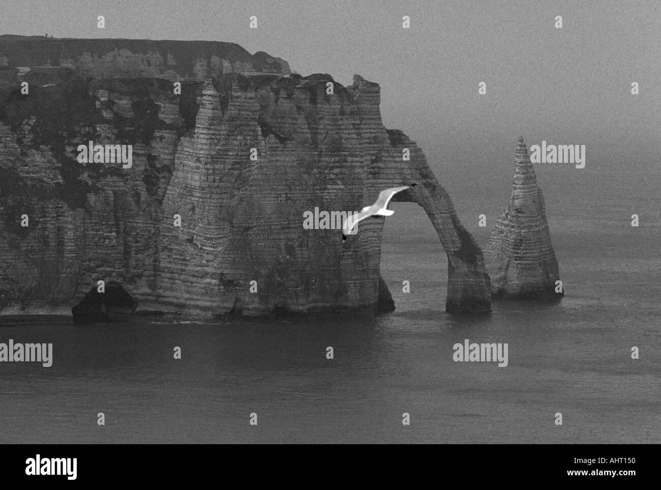 France Europe Etretat rock with sea gull flying BW - Stock Image