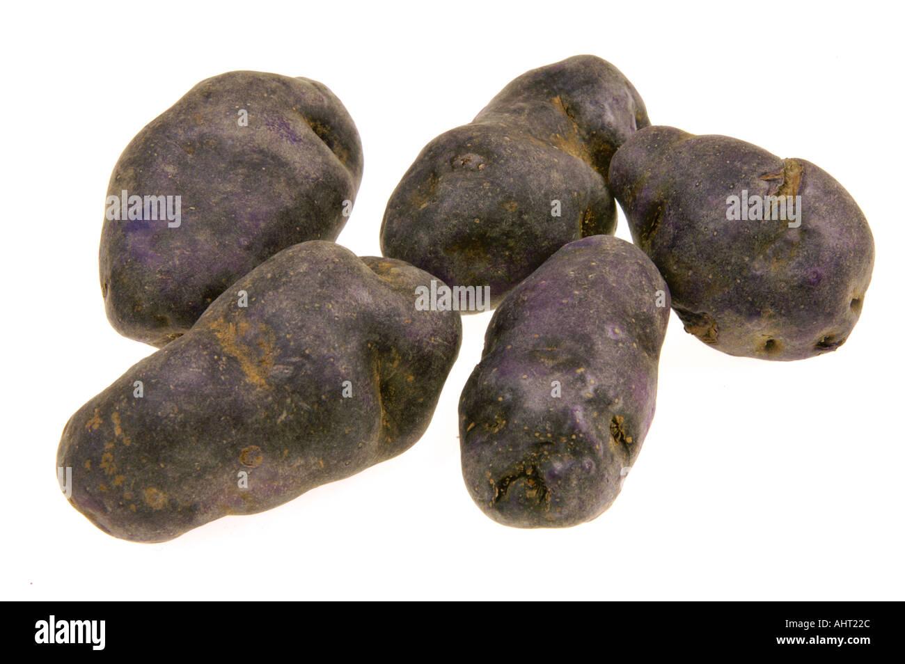 new sort of potatoes BLUE POTATO french of france special kind black   violett noire black - Stock Image