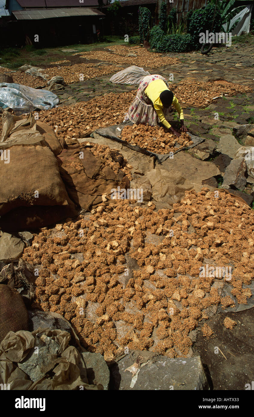 Drying sorghum to make beer in Ethiopia Stock Photo