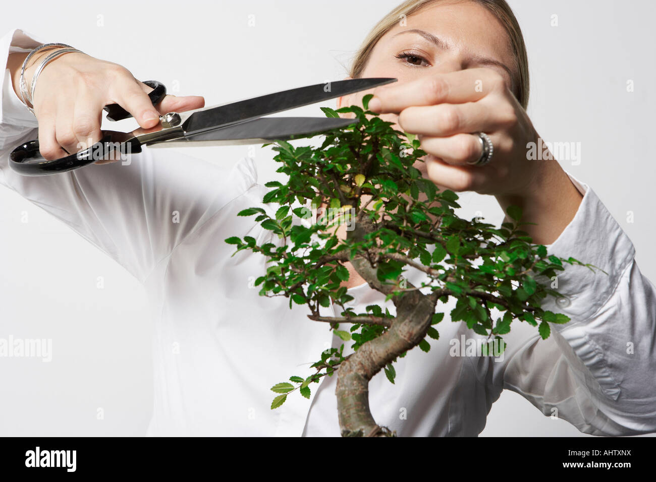 Young business woman at desk pruning Bonsai tree. - Stock Image