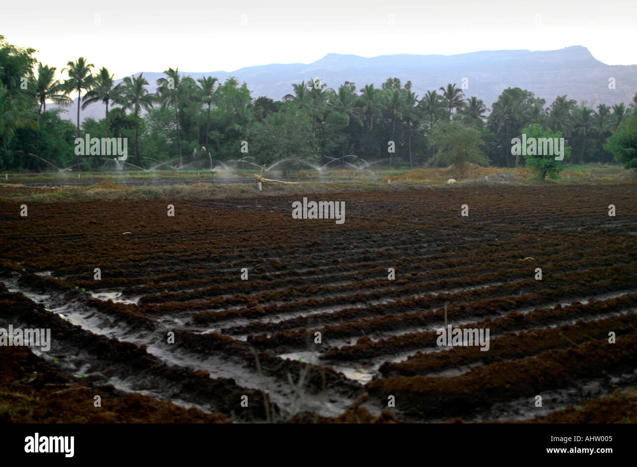 Drip Irrigation Farm Stock Photos Amp Drip Irrigation Farm